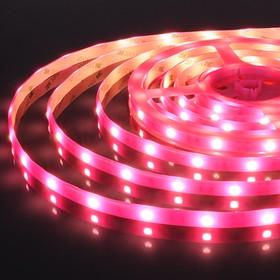 30Led-7.2W-IP65-12V розовый, светонакопительный эффект, Лента светодиодная, 30SMD(5050)/m, 7.2Вт/м, цена за катушку 5м