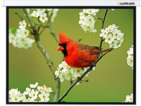 Экран LUMIEN Master Picture LMP-100121, 200х173 см, 16:9, настенно-потолочный
