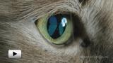 Смотреть видео: Геометрическая оптика