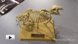 Смотреть видео: Наглядное пособие (скелет кролика)