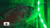 Смотреть видео: Классы защиты светодиодной ленты